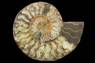 "8"" Cut Ammonite Fossil (Half) - Agatized For Sale, #101039"