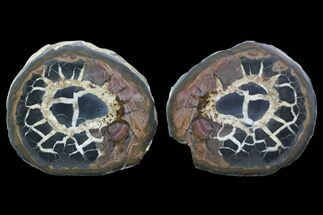 Septarian - Fossils For Sale - #101214
