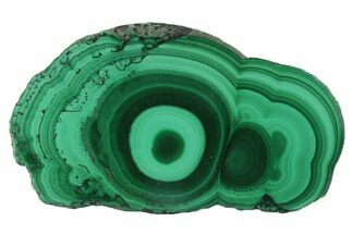 "1.6"" Polished Malachite Stalactite Slice - Congo For Sale, #101900"