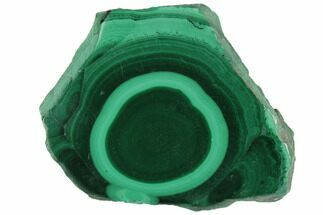 "Buy 1.4"" Polished Malachite Stalactite Slice - Congo - #101917"