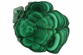 "1.4"" Polished Malachite Stalactite Slice - Congo For Sale, #101936"