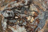 "15.1"" Colorful Petrified Wood (Araucaria) Round - Madagascar - #102436-1"