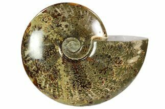 "Buy 7.3"" Polished, Agatized Ammonite (Cleoniceras) - Madagascar - #102598"