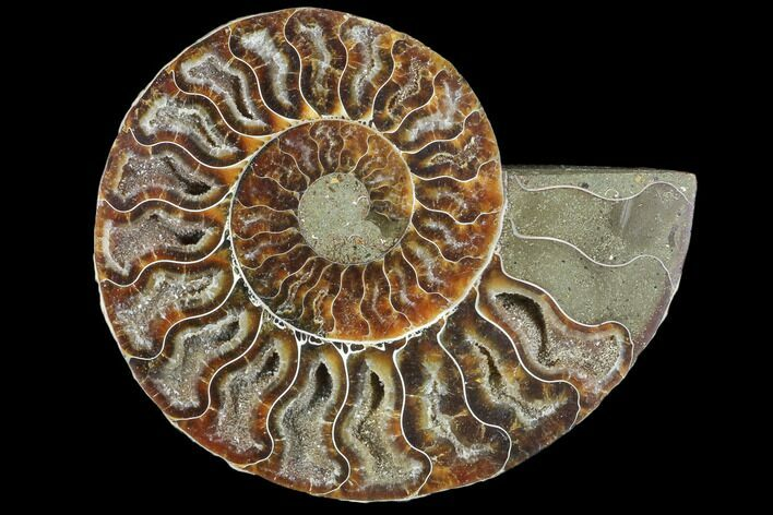 "4.7"" Agatized Ammonite Fossil (Half) - Crystal Chambers"