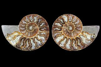 "Buy 4.2"" Cut & Polished Ammonite Fossil - Agatized - #103075"