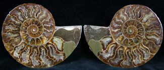 "4.2"" Cut and Polished Ammonite Pair For Sale, #7325"