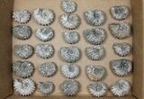 Wholesale: 5Kg Bumpy Ammonite (Douvilleiceras) Fossils - 52 pieces - #103213-2