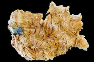 "Buy 4.6"" Pink and Orange Bladed Barite - Mibladen, Morocco - #103732"