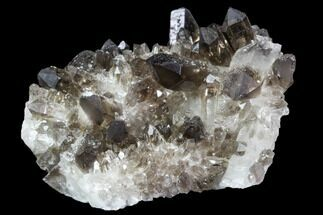 "2.6"" Dark Smoky Quartz Crystal Cluster - Brazil For Sale, #104075"
