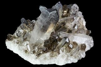 Quartz var. Smoky - Fossils For Sale - #104076