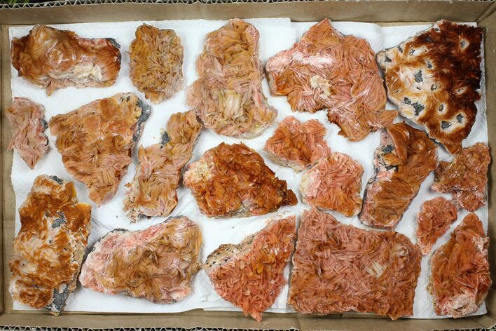 Wholesale Lot - Pink and Orange Bladed Barite - 19 Pieces