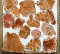 Wholesale Lot - Pink and Orange Bladed Barite - 22 Pieces - #103747-1