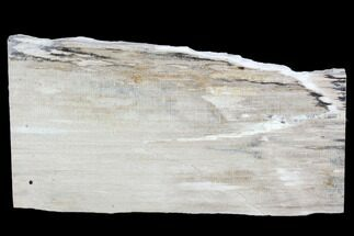 "5.8"" Petrified Wood Slice - Tom Miner Basin, Montana For Sale, #104864"