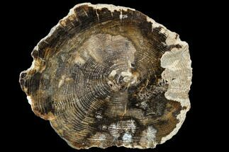 Cherry - Fossils For Sale - #104916