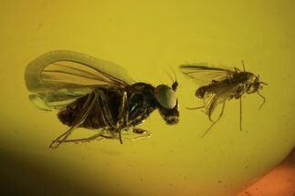 Buy Detailed Fossil Flies In Baltic Amber - Excellent Eye Facets! - #105433