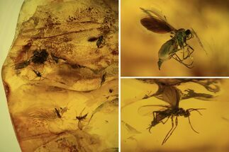 Order Diptera - Fossils For Sale - #105525
