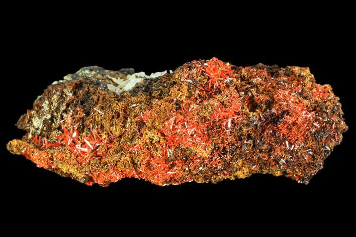 "3.2"" Bright Orange Crocoite Crystal Cluster with Cerussite - Tasmania"