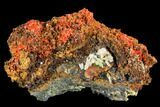 "3.2"" Bright Orange Crocoite Crystal Cluster with Cerussite - Tasmania - #106823-1"