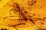 Fossil Spider (Aranaea) And Wasp (Hymenoptera) In Amber - Myanmar - #107582-2