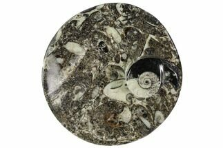"4.3"" Round Fossil Goniatite Dish - Morocco For Sale, #108017"