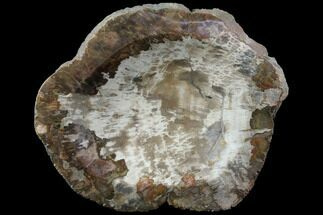 "10.4"" Polished Petrified Wood Dish - Madagascar For Sale, #108191"