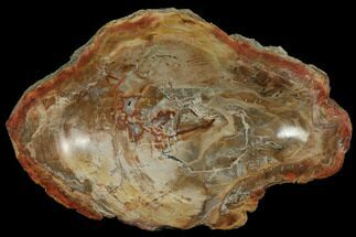 "Buy 7.4"" Colorful Polished Petrified Wood Bowl - Madagascar - #108202"