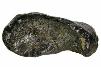 Whale (Unknown Species) - Fossils For Sale - #109242
