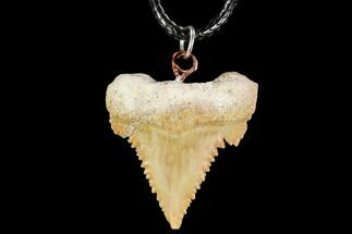 "Buy 1.18"" Fossil Shark (Palaeocarcharodon) Tooth Necklace -Morocco - #110254"