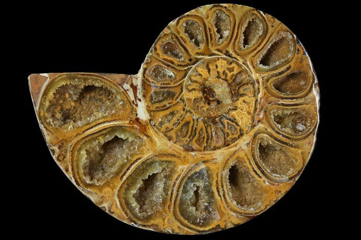 "3.0"" Sliced, Agatized Ammonite Fossil (half) - Jurassic"
