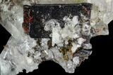 "1.9"" Brookite and Quartz Crystal Association- Pakistan - #111340-1"