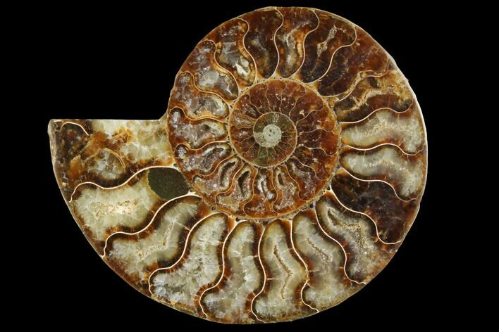 "4.1"" Agatized Ammonite Fossil (Half) - Crystal Chambers"