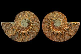 "4.6"" Agatized Ammonite Fossil (Pair) - Madagascar For Sale, #111470"