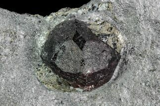 Garnet var. Almandine & Graphite - Fossils For Sale - #111846