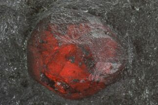 Red Embers Garnet in Graphite - Massachusetts For Sale, #111842