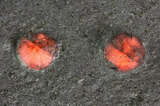 "Buy 2.2"" Red Embers Garnets in Graphite - Massachusetts - #111877"