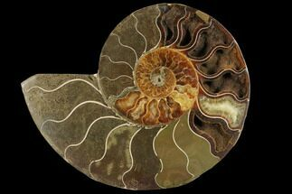 "Bargain, 5.1"" Agatized Ammonite Fossil (Half) - Madagascar For Sale, #111521"