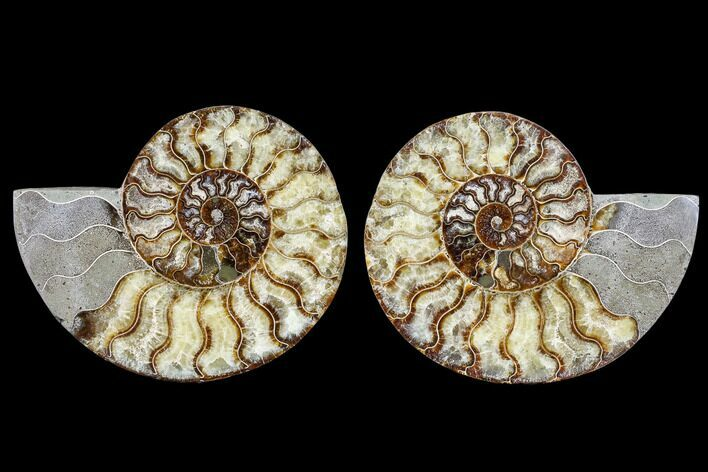 "7.2"" Agatized Ammonite Fossil (Pair) - Madagascar"