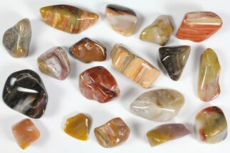 Buy Tumbled Arizona Petrified Rainbow Wood - 8oz (~18 pc.) - #113446