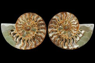 "Buy 5.6"" Sliced Ammonite Fossil (Pair) - Crystal Lined Chambers - #115315"