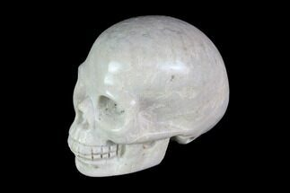 "1.9"" Realistic, Polished Fossil Coral Skull For Sale, #116573"