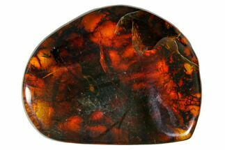 "Buy 1.6""  Polished Chiapas Amber (8 grams) - Mexico - #114775"