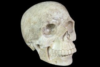 "5.2"" Realistic, Polished Fossil Coral Skull For Sale, #116690"