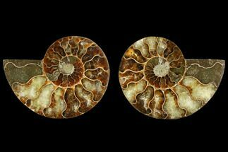 "Buy 3.3"" Sliced Ammonite Fossil (Pair) - Agatized - #116788"