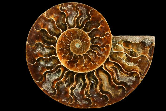 "3.75"" Agatized Ammonite Fossil (Half) - Madagascar"