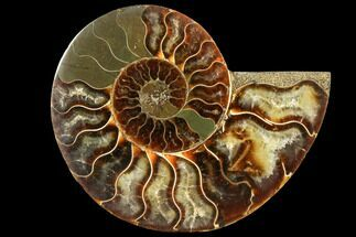 "Buy 3.55"" Agatized Ammonite Fossil (Half) - Madagascar - #116803"
