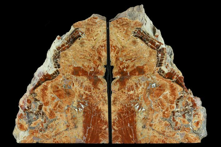 "6.8"" Arizona Petrified Wood Bookends - Red And Orange"