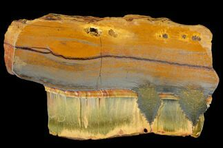 "4.5"" Marra Mamba Tigers Eye - Mt. Brockman (2.7 Billion Years) For Sale, #117173"