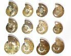 "Wholesale Lot: 3.1 - 4.1"" Polished Whole Ammonite Fossils - 22 Pieces - #116658-2"