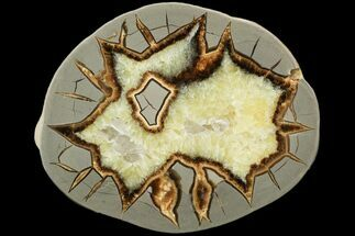 Septarian - Fossils For Sale - #119697