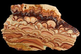 "7.1"" Polished Slab Of Rolling Hills Dolomite - Mexico For Sale, #120107"